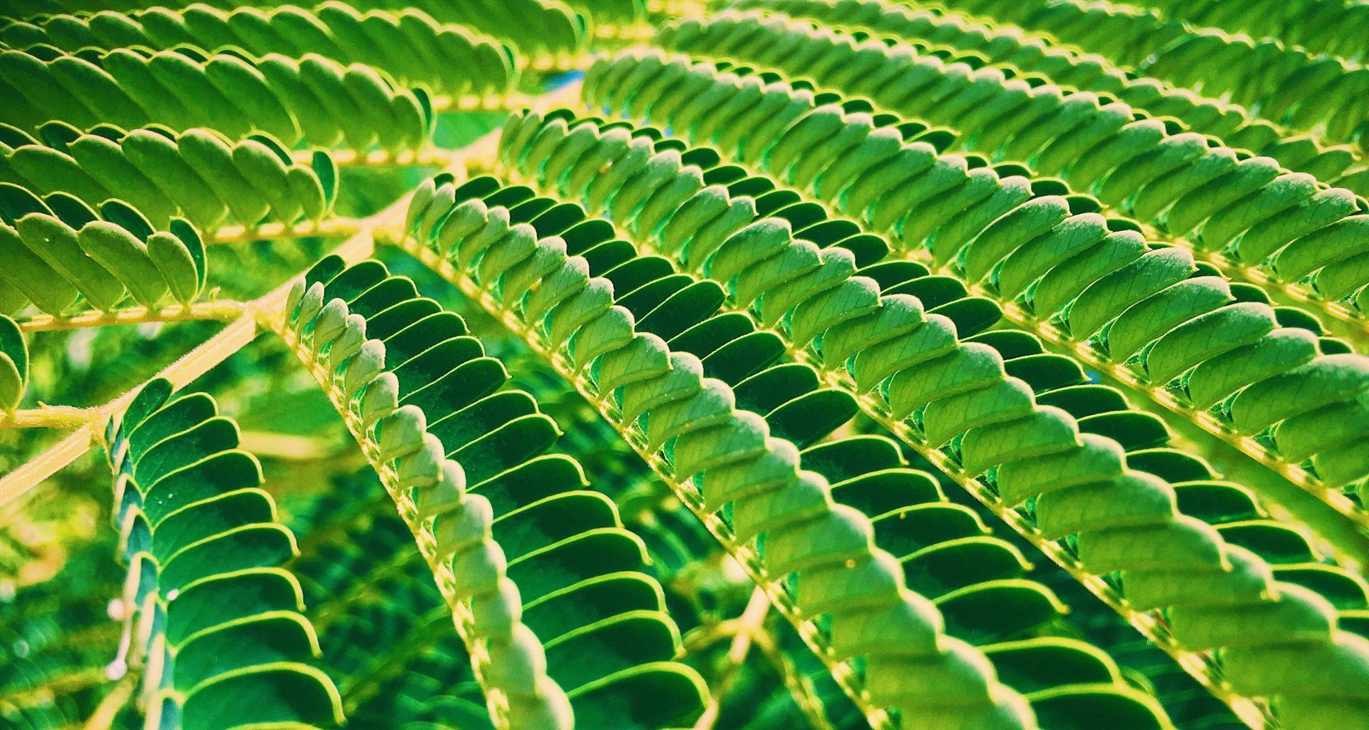 Bioenergy and the road to net-zero
